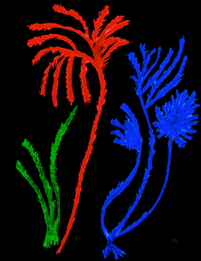 Green_Red_Blue_1_2509_x3246